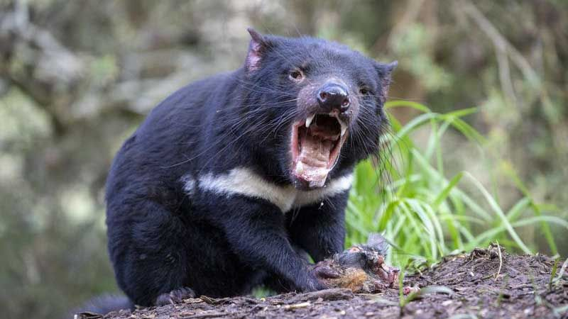 Farlige dyr i new zealand