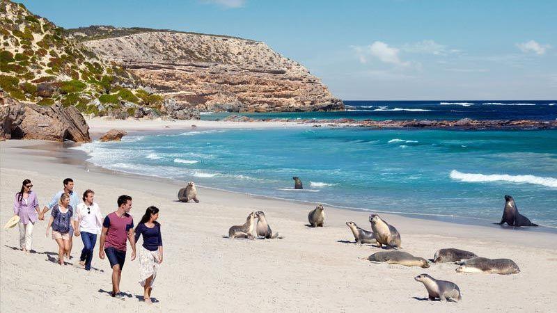 Seal Bay på Kangaroo Island.