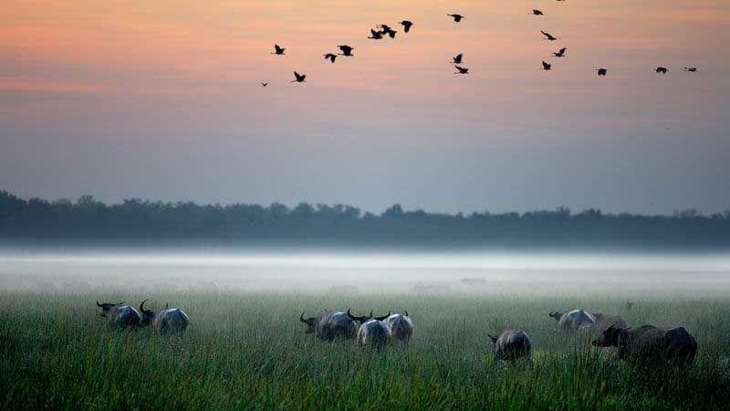 Bamurru Plains.