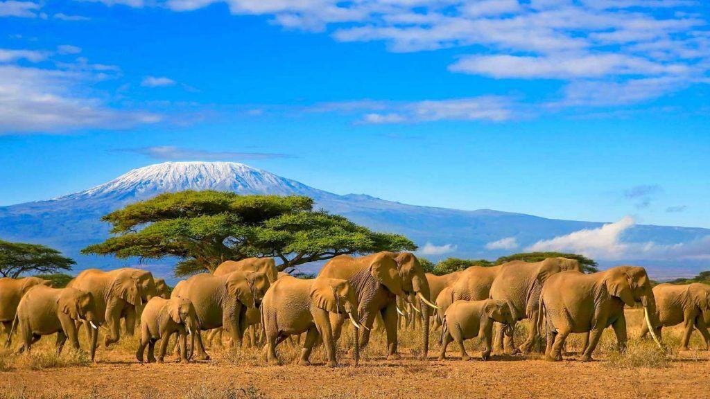Kenya med Kilimanjaro i bakgrunnen.