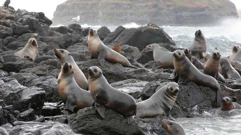 Seal Rock på Phillip Island.